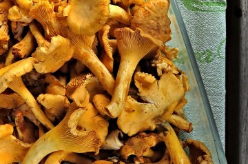 Mushrooms Aux Croustade