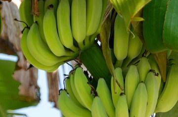 Banana Coconut Loaf