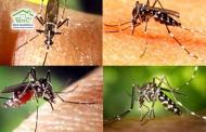 Quy trình điều dưỡng chăm sóc người bệnh sốt xuất huyết