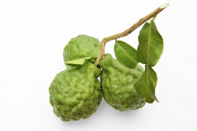 feuilles de kaffir aromatiques