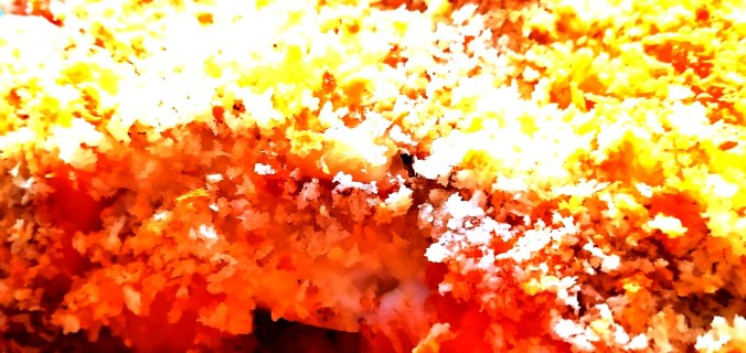 gratin de riz au panko