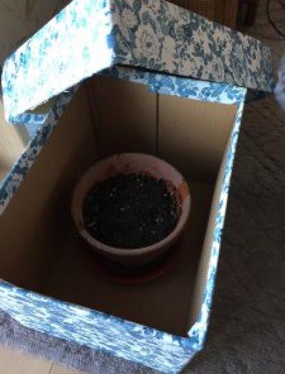 段ボール箱、鉢
