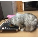 100均DIYで、猫のご飯台を手作り!初心者でも大丈夫!