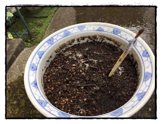 土を湿らせ棒で穴を開けます