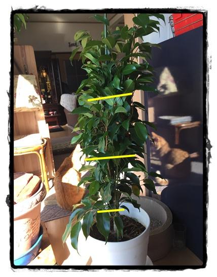 針金で枝が広がらないようにすると姿かたちがキレイに!