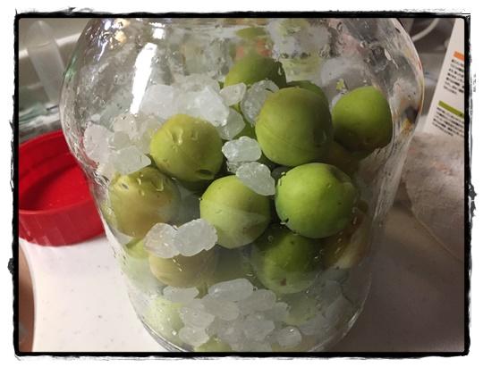 梅と氷砂糖を交互に入れて層になるように。