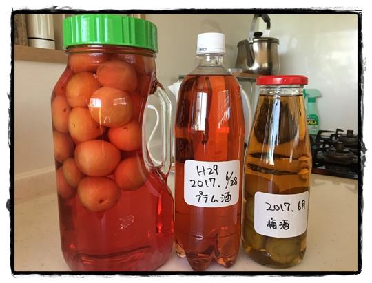 果実酒の愉(たの)しみ、プラムと梅を使って