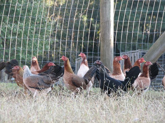 Black Hatch Farm