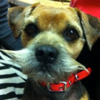 The Picture Framing Shop: Meet Teddy The Shop Dog