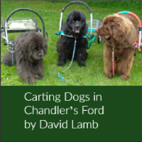 Carting Dogs in Chandler's Ford - David Lamb