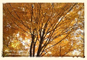Shades of Fall-Deep Golden