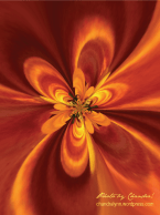 Autumn Flower: Warp