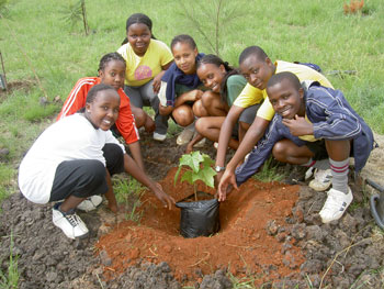 Pupils from Juja Preparatory School plant trees