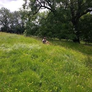 meadow near Bishop Wilton