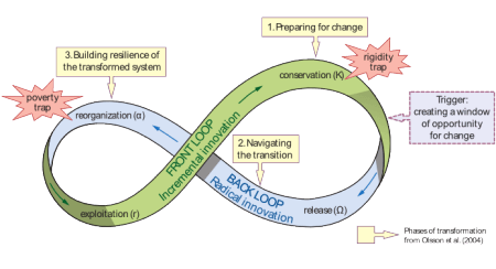 The Adaptive Cycle with 4 phases: Exploitation, Conservation, Release, Reorganization