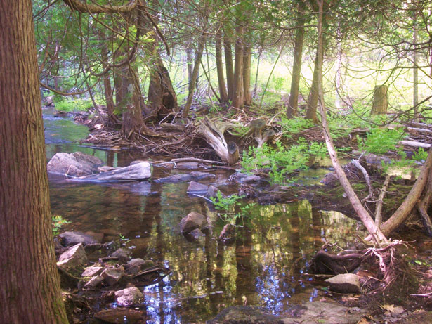 wetlands and stream