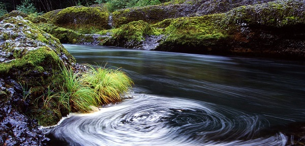 swirling eddy in the clackamas river in oregon, with a very green rain forestlike bank