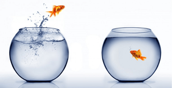 Two fish vowls, each with water and a single goldfish, with the goldfish in the left bowl leaping out and trying to reach the bowl on the right