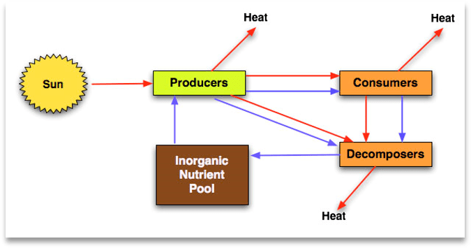 A simple model of a biological ecosystem, with the sun providing the basic source of energy, energizing producers to feed consumers, and letting consumers feed decomposers. All this action creates and maintains an Inorganic nutrient pool available to producers. Producers, Consumers, and Decomposers shed heat. And so the cycle goes.