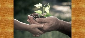 Six Ways Elders Can Save the World - ChangingAging 1