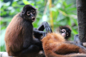Osa Wildlife Santuary Costa Rica