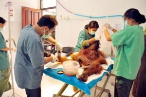 orang shot more Proses-operasi-medis