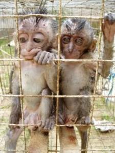 macaques-in-pramuka-market-in-jakarta