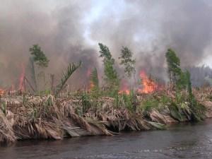pic fire Drainage makes peatlands susceptible to fire © Pieter van Eijk