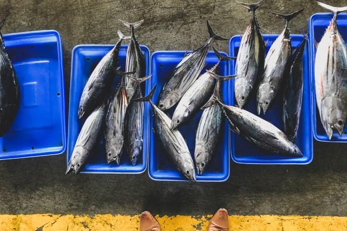 台東農遊行。5-成功的魚