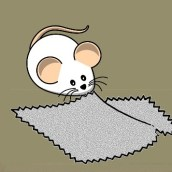 Letter from India: THE STORY ABOUT A RAT AND TWO PIECES OF CLOTH (Câu chuyện về con chuột và mảnh vải)