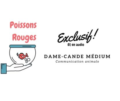 Communication animale passion