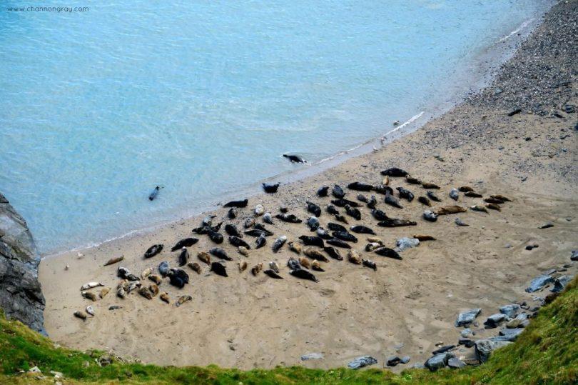 The Seals at Godrevy, Cornwall
