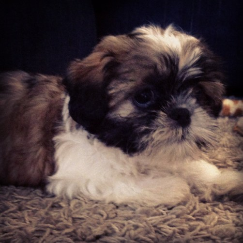 new puppy, Conestoga Mall in waterloo, pet store, lifestyle blogs, health tips