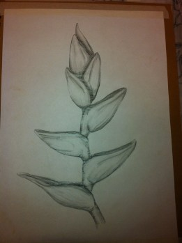 Heliconias Plant greyscale sketch