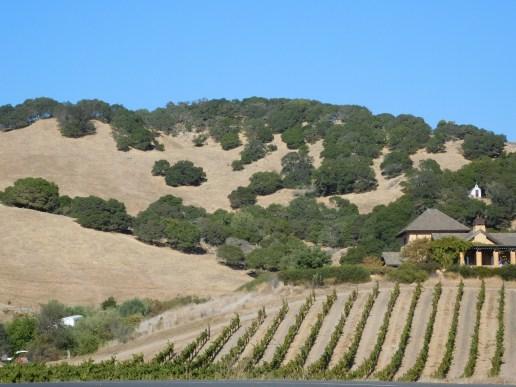 拿帕河谷的葡萄园