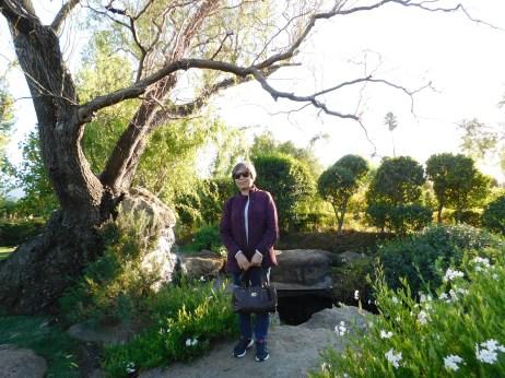 Chateau Peju 酒庄花园