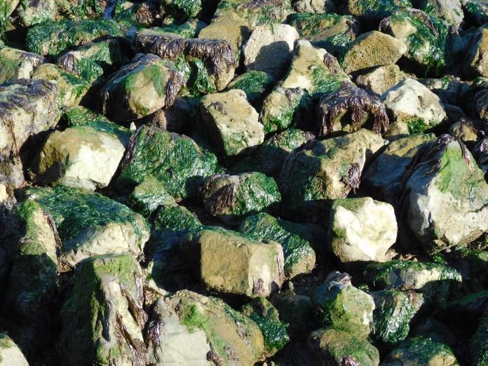 礁石和海藻