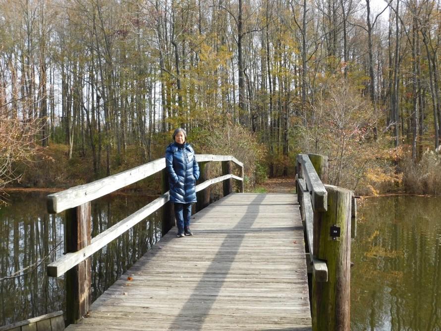 Lums Pond州立公园小桥。
