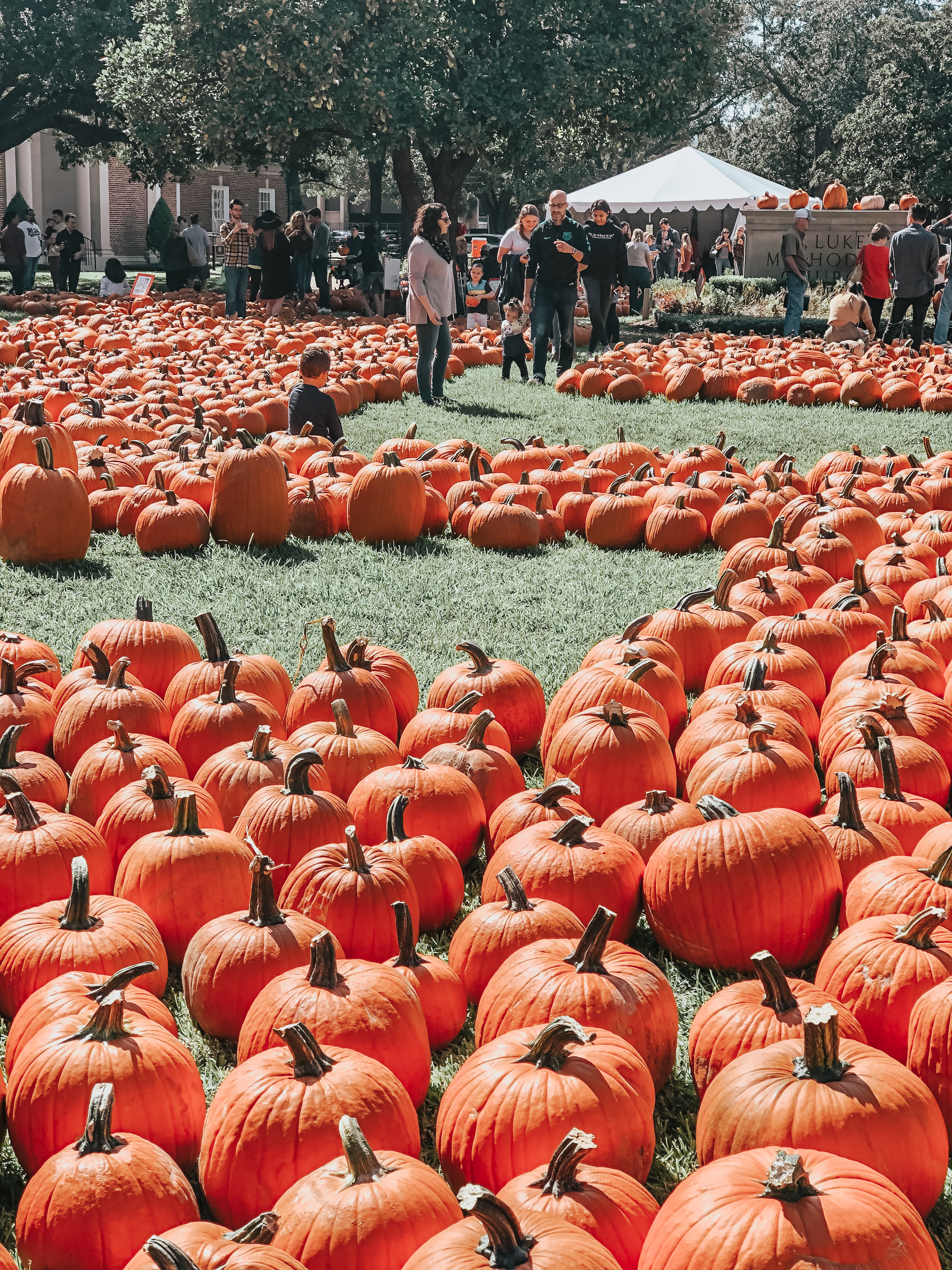 Pictures at the Pumpkin Patch | Chaos and Coffee