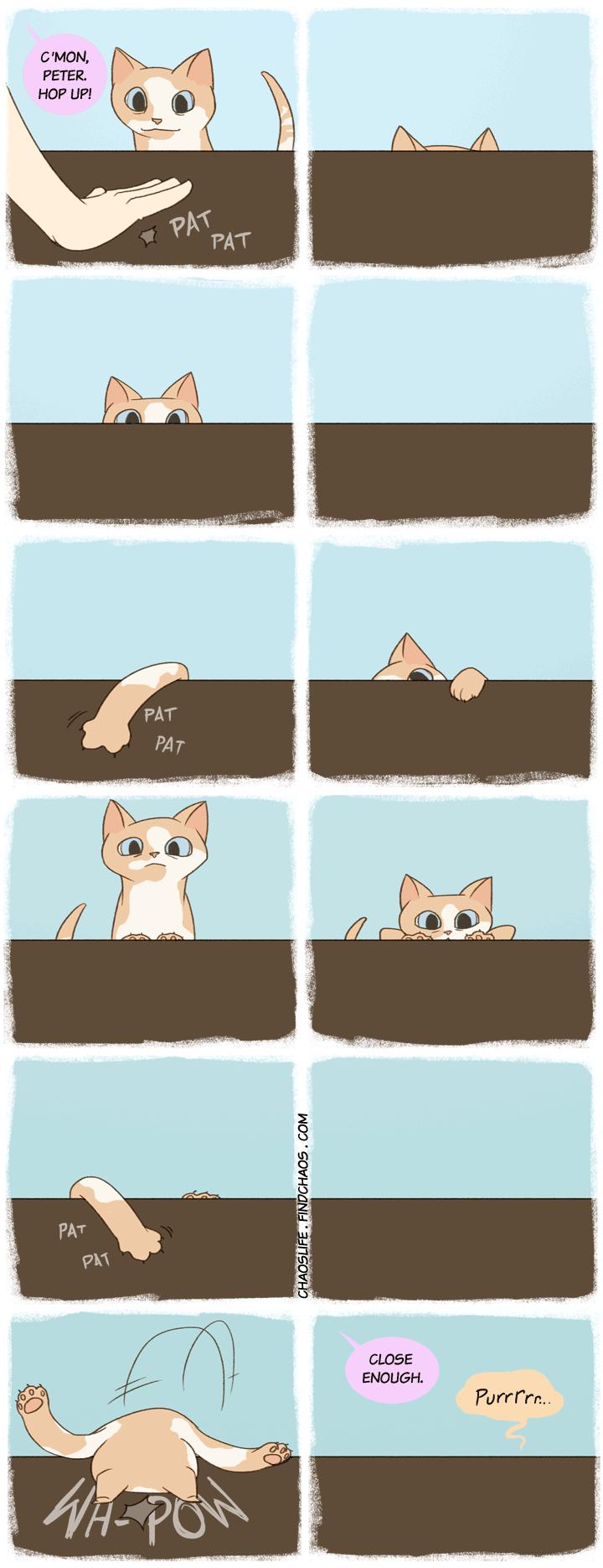 Feline Perseverance