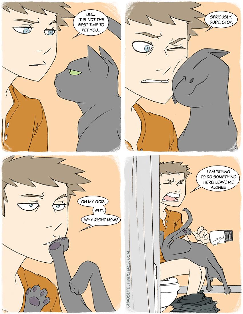 Invasive Cat