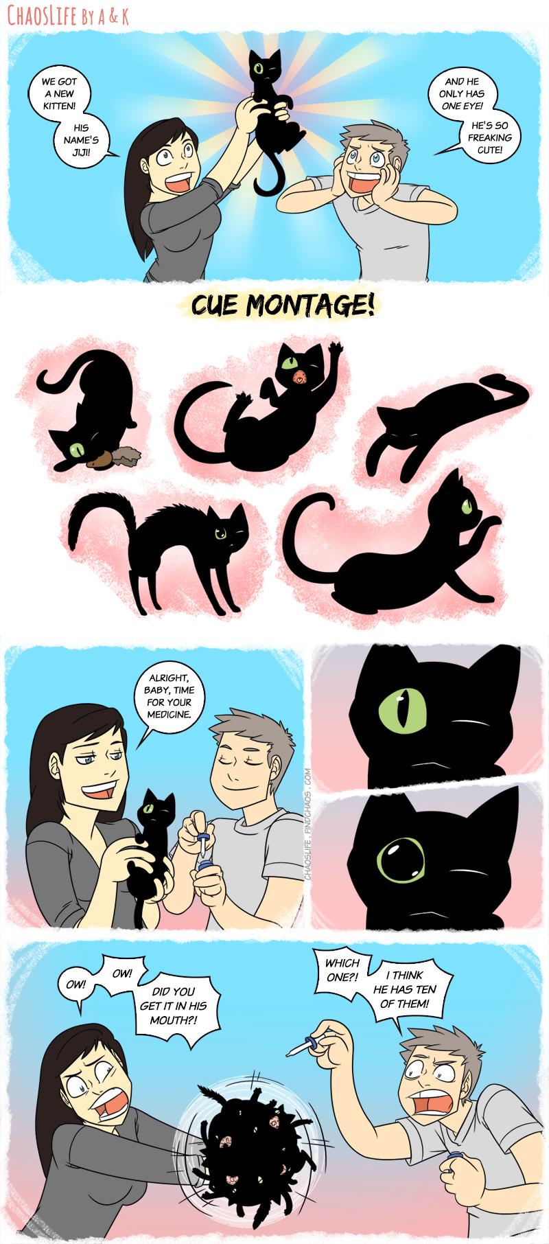 Kitten Kerfuffle
