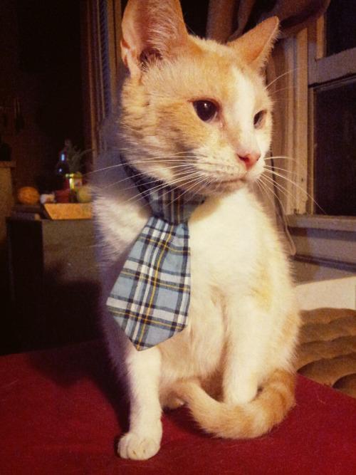peter-business