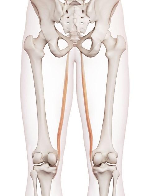 dolor en musculo semimembranoso