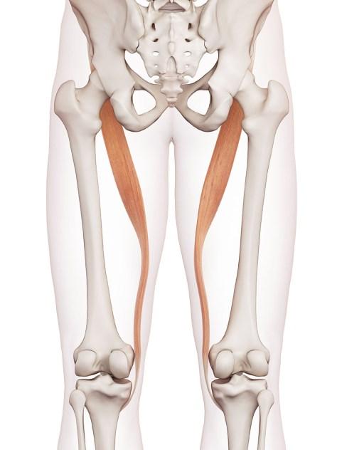 Causar cadera los apretados en de las la flexores piernas? ¿Pueden dolor