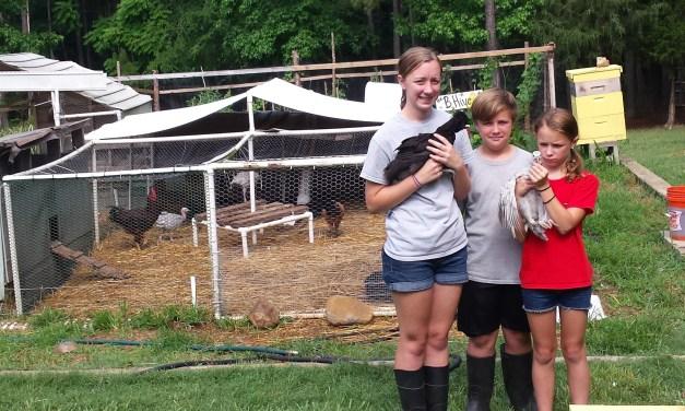 Backyard Farmers Brace For Bird Flu