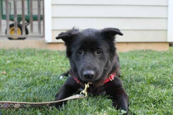 Adopt-A-Pet: Tegan