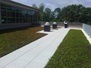 Northside Elementary rooftop garden
