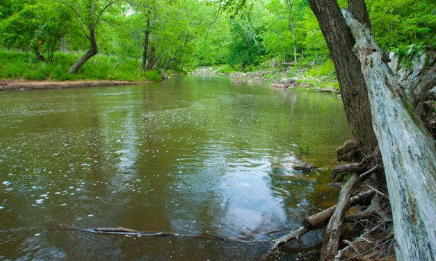 Eno River Association Acquires 56 Acres of Land