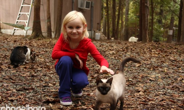 Goathouse Refuge Cat Cafe